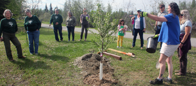 Alaska Community Forest Council offers Arbor Day grants