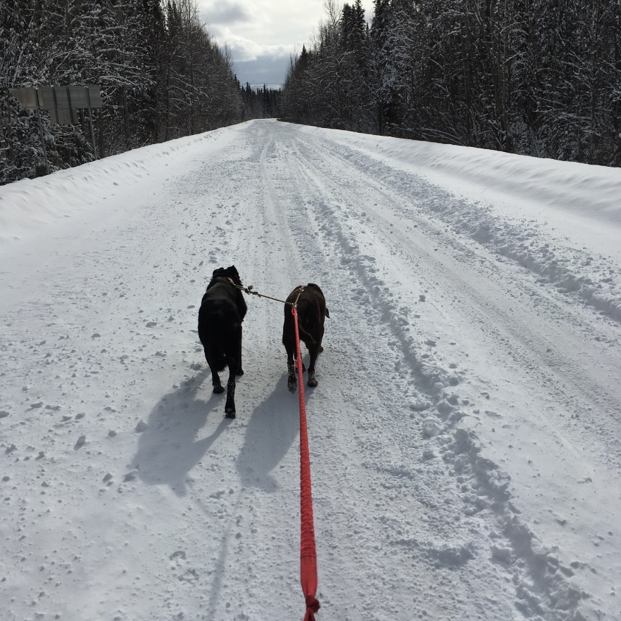 Skijoring out to the Cabin