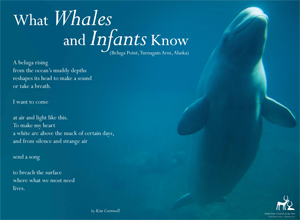 What Whales and Infants know